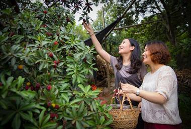 Dafu Yangmei, a popular Wuxi summer fruit