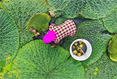 Jitoumi enters harvest season in Wuxi