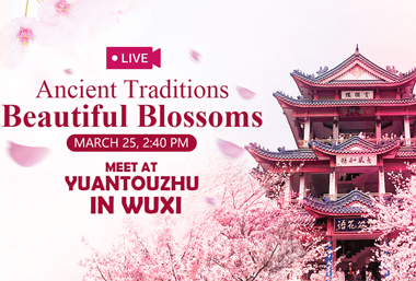 【Watch it again】Expats tour Wuxi in cherry blossoms
