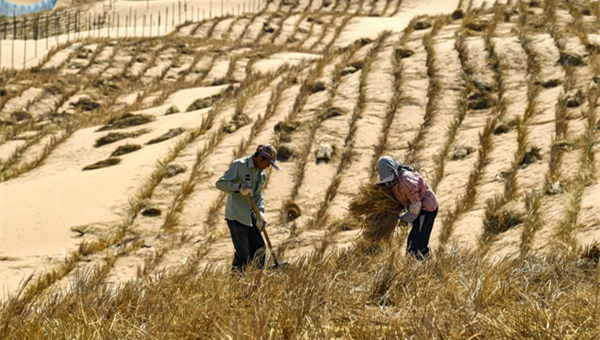 Chinese experience in desert control helps green the world