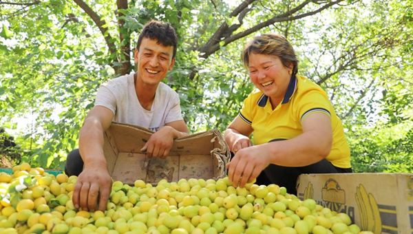 'Pairing assistance' program in China introduces fruits from Xinjiang to rest of the country