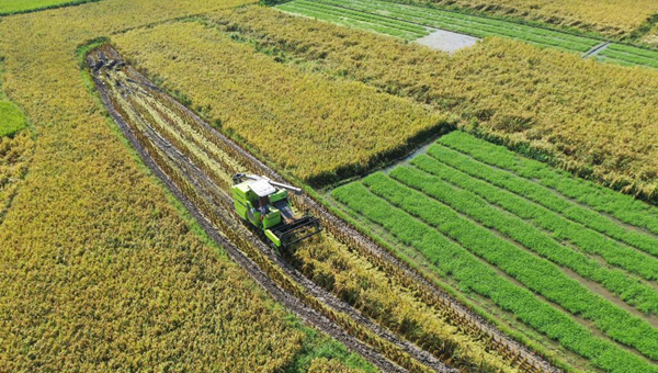 High-standard farmland can improve food security