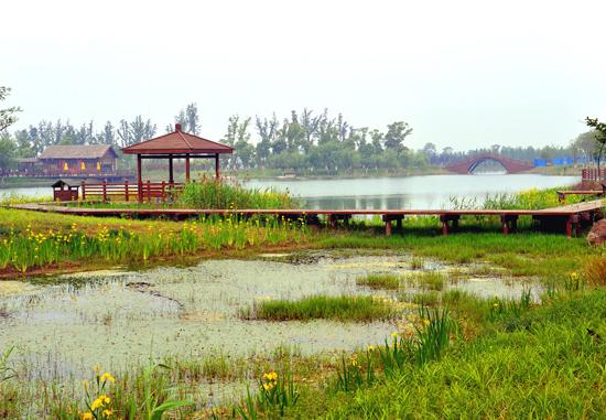 生态,湿地公园.jpg