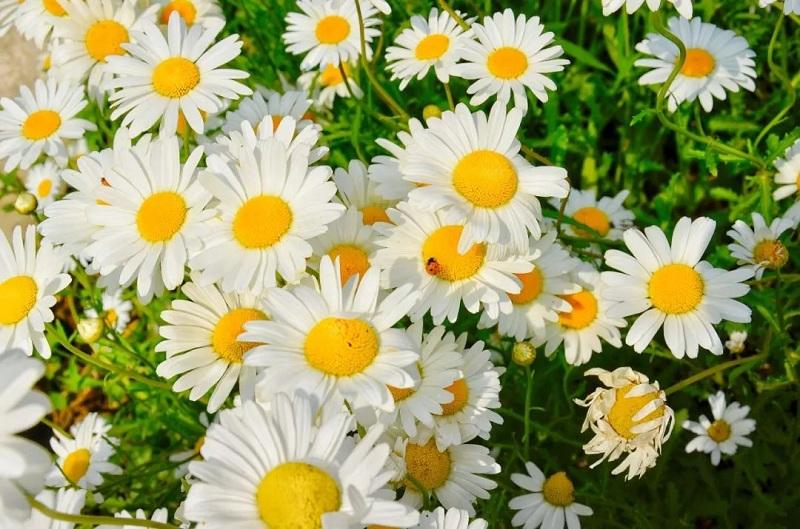 blooming flowers in Xijing Bay fascinate locals3.jpg.jpg