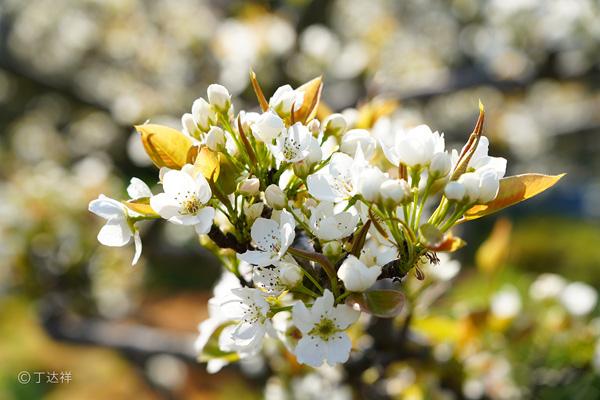梨花节4.jpg