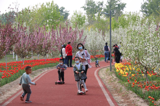 Daxing's tulip garden opens to public as May Day holiday approaches