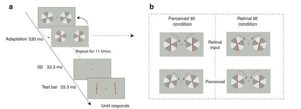 Chinese research team reveals importance of feedback signals for cortical neurons, to recalibrate their sensitivity
