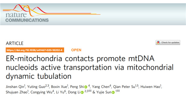 Chinese research teams identify active transportation mechanism of nucleoids