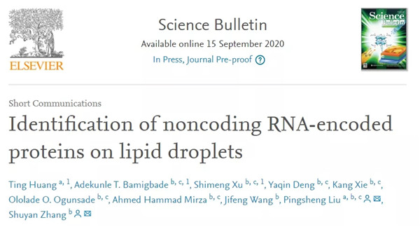Research team identifies noncoding RNA-encoded proteins on lipid droplets