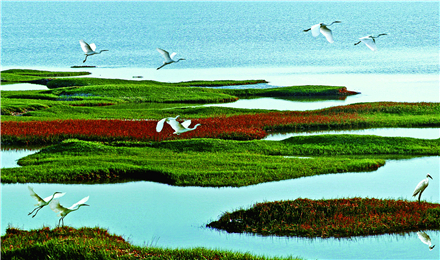 yellow river delta national nature reserve in Dongying.5_副本.jpg