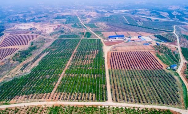 Penglai Haolin Fruit Cooperative