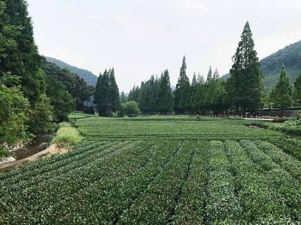 茶奥会.png