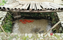 Fish farming system in Quzhou recognized as Chinese agricultural heritage item