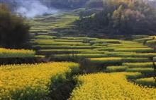 Quzhou rape fields bloom in springtime
