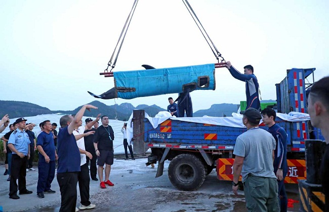Four more rescued whales released