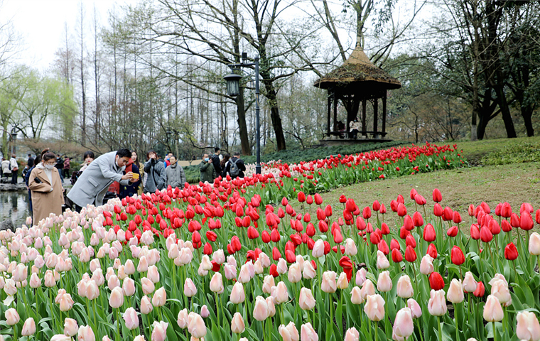 Spring flowers vying for tourists in Zhejiang