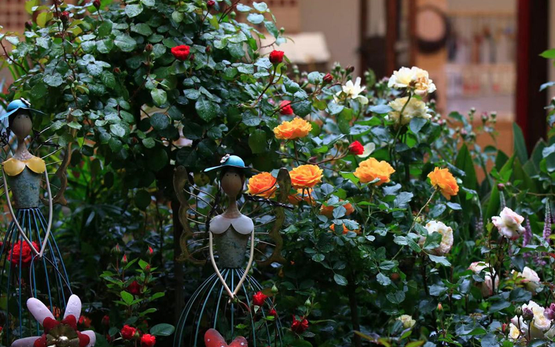 Hangzhou hosts Chinese rose exhibition in May
