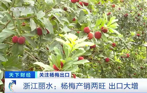 Waxberries exported to Europe bring sweet fortune to Zhejiang