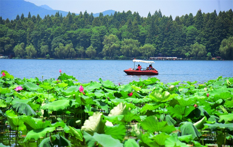 Four scenic spots in West Lake to admire lotus