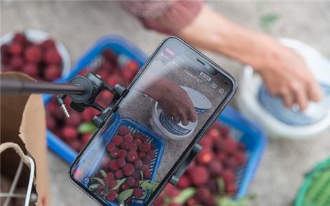 Sweet waxberries bring prosperity to Xianju