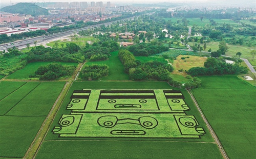 Rice paddy artwork features Liangzhu Culture