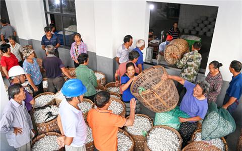 Farmers' festival helps promote culture