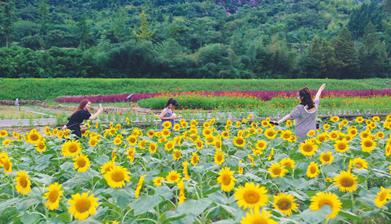 Anji village reaps rewards from green development