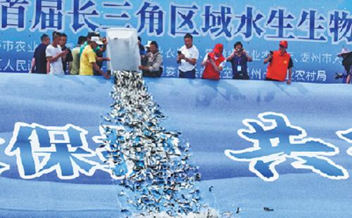 Yangtze conservation efforts bear fruit