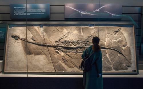 Zhejiang Museum of Natural History - Anji Branch