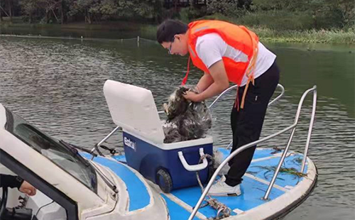 Hangzhou conducts first survey of fish in West Lake