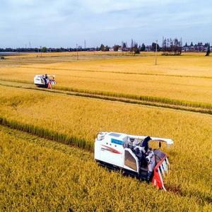 Jiaxing wins highest honor in Zhejiang for grain yield