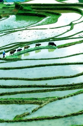 Lishui adds to national intangible cultural heritage list2.jpg