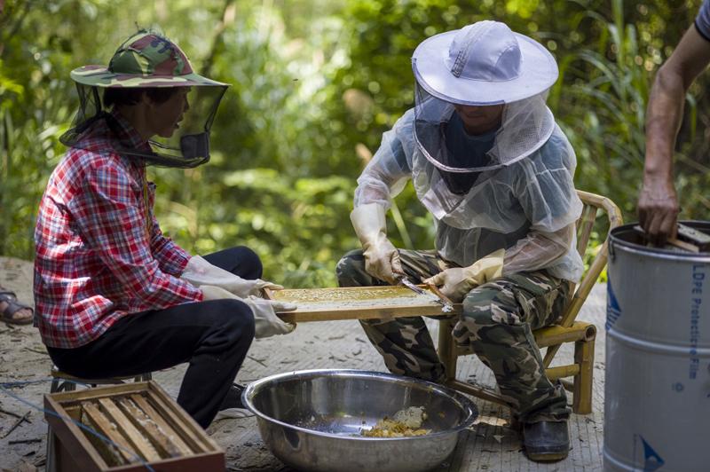 beekeeping1.jpg