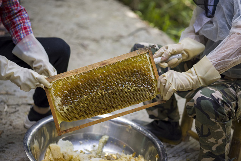 beekeeping3.jpg