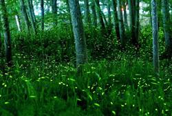 fireflies-in-lishui.jpg