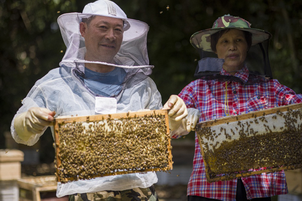 beekeeping2标.jpg