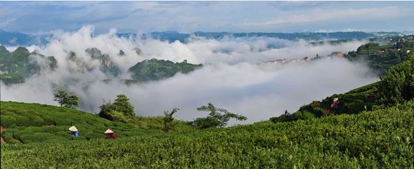 〈云上茶香〉摄于中国名茶之.jpg