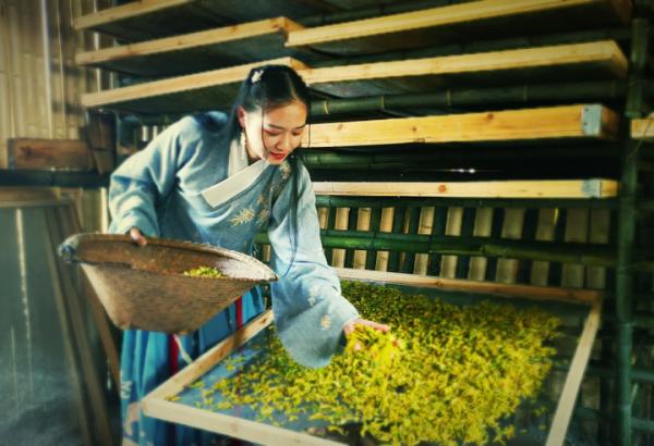Shengzhou accounts for a third of China's green tea exports