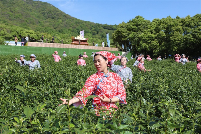 Festival turns tea into culture1.jpg