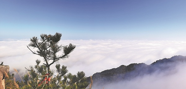 Magnificent Jiuxian Mountain bathed in sea of clouds