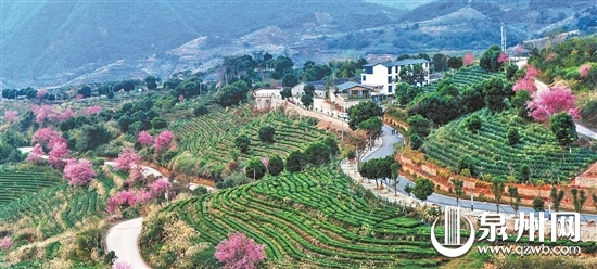 New tour route in Anxi county sparks interest