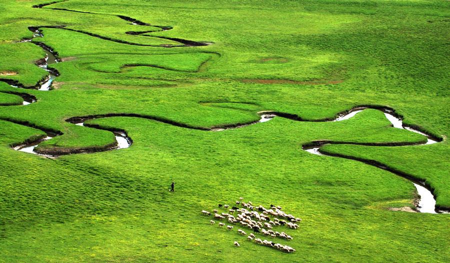 Wolves' wetland a wondrous sight in Gansu