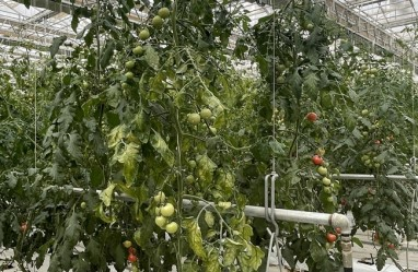 Smart technology aids precision agriculture in Gansu