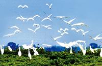 Explore the Eco Zhanjiang