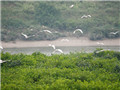 Leizhou's wetlands included on Top 10 Notable Coastal Wetlands List