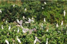 Leizhou Jiulongshan Mangrove Wetland Park