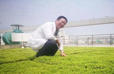 Zhanjiang professor promotes green roofs