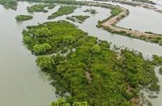 China's largest mangrove regains vitality