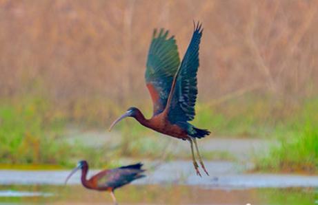鸟-标题图.jpg