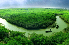 Featured forest tour routes in Zhanjiang